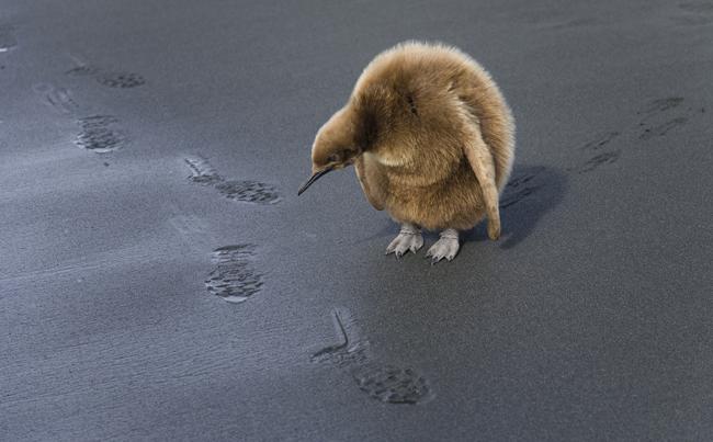 footprints-copia-copia